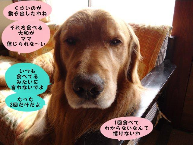 009_20120330145052.jpg