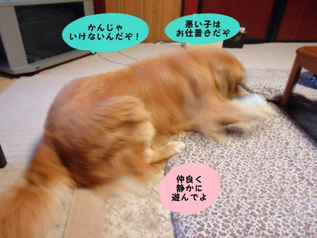 009_20120503194516.jpg