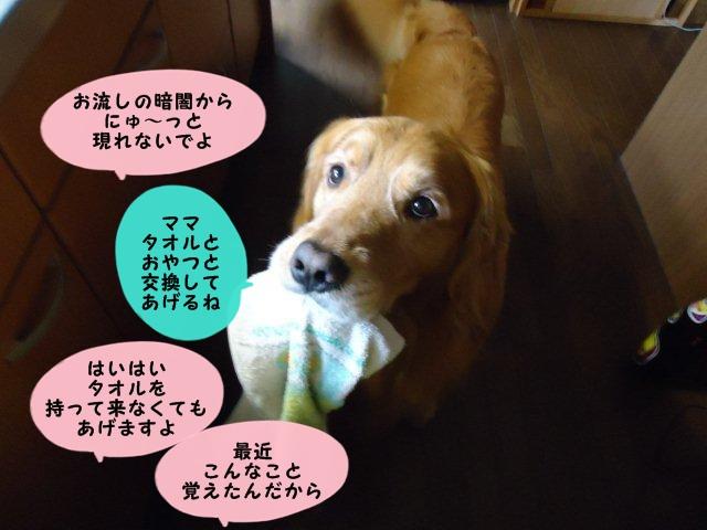 010_20120423104409.jpg