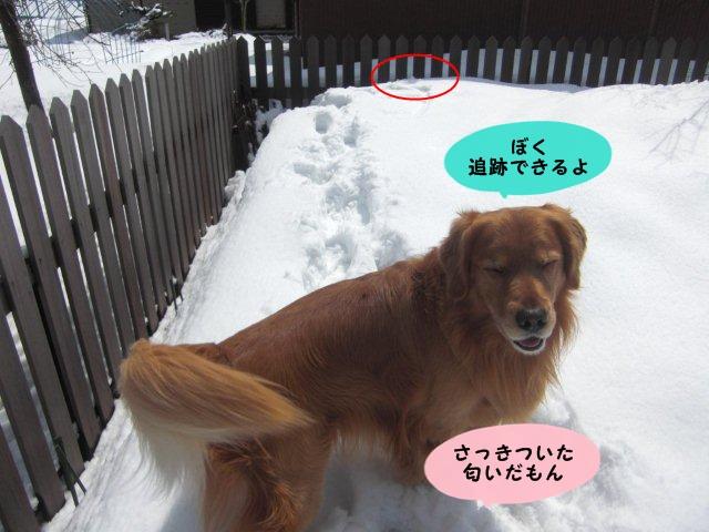 039_20120326131541.jpg