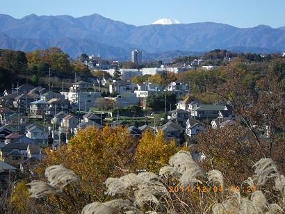 小山田緑地からの丹沢と富士山