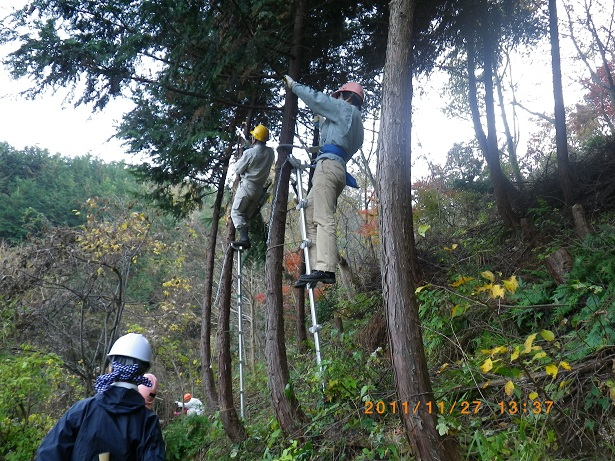 林業体験・枝打ち