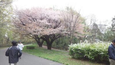 小山田内裏12.4.21