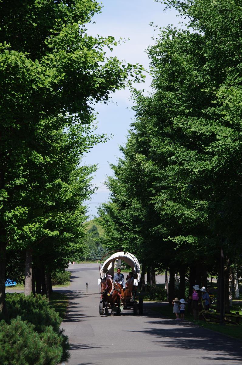 s20110802_1401_YK7_5546.jpg