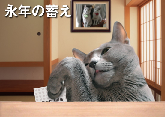 年金猫12