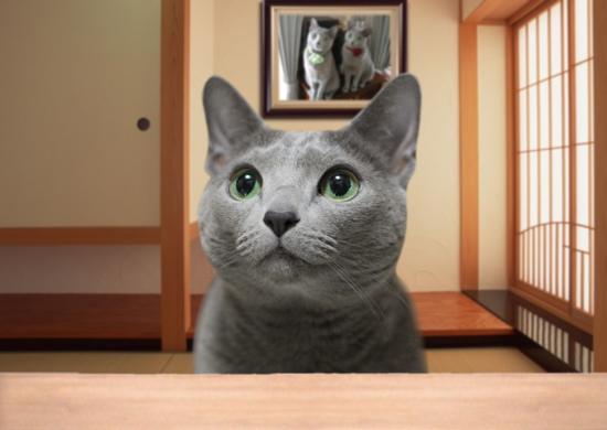 年金猫10