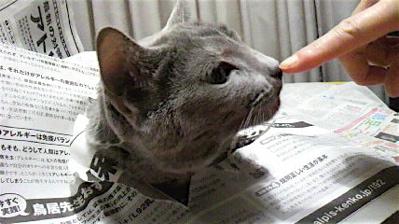 新聞猫オチ2