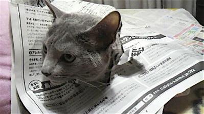 新聞猫オチ