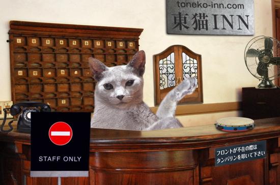 東猫イン7