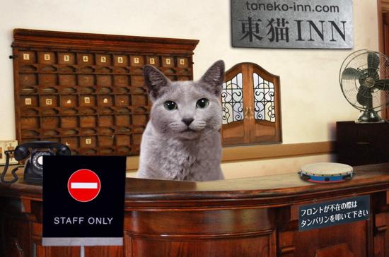 東猫イン17