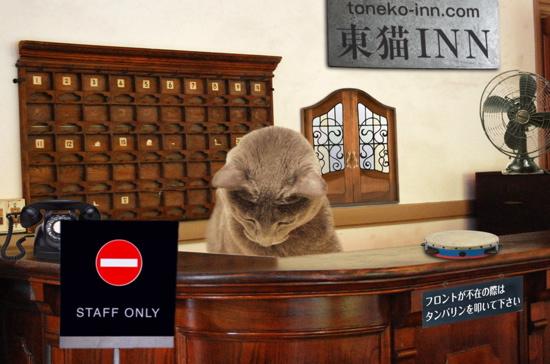 東猫イン23