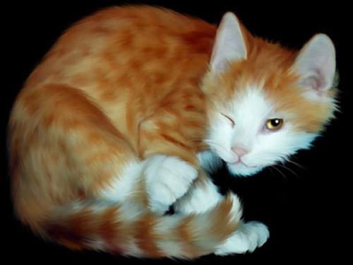cat-pic3.jpg