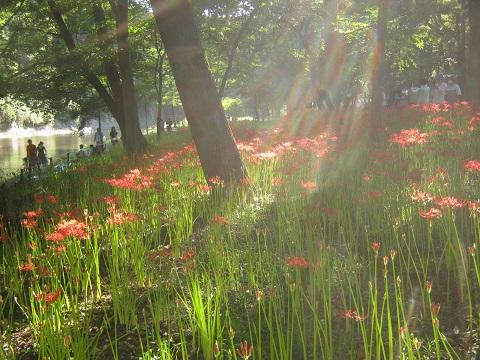 kinchakuda140914-103.jpg