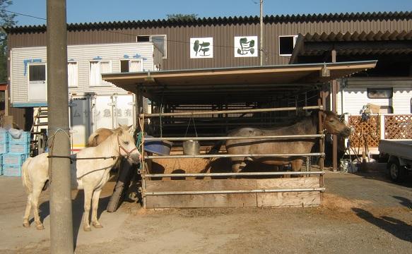 kinchakuda140914-114.jpg