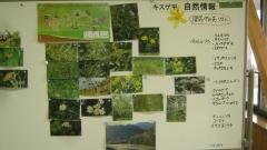 kirihuri140920-108.jpg