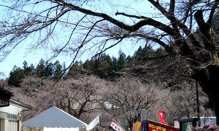 清雲寺の枝垂れ桜はまだじゃった