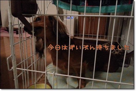 20131127_183125お水待ちバーディー③