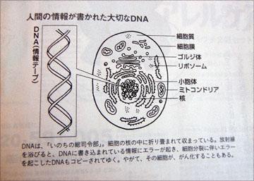 blog Yanagisawa Keiko, DNA_DSC0275-2.8.12