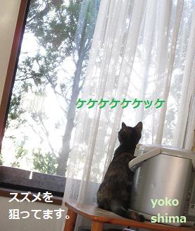 2013 1213はなケケケ