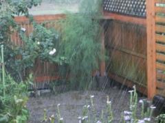 ドシャブリの庭