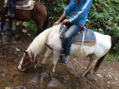 白馬水を飲む