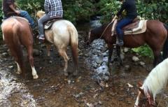 小川で休憩する馬