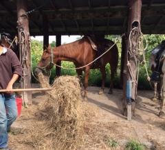 牧草を食べる