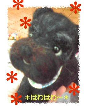 シュナちゃん1