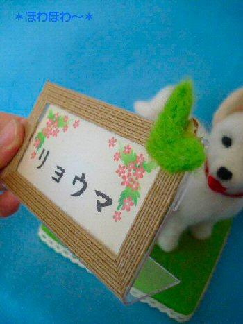 北海道わんこ5