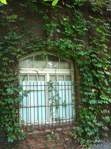 1824蔦の絡まる窓110908