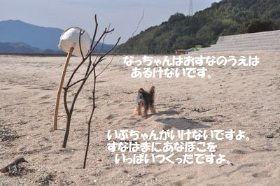 DSC_0083_20110928225216.jpg