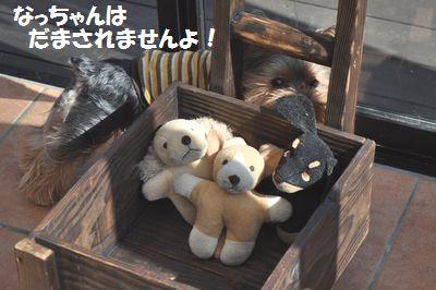 DSC_0132_20111027223309.jpg