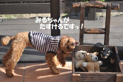 DSC_0146_20111027223402.jpg