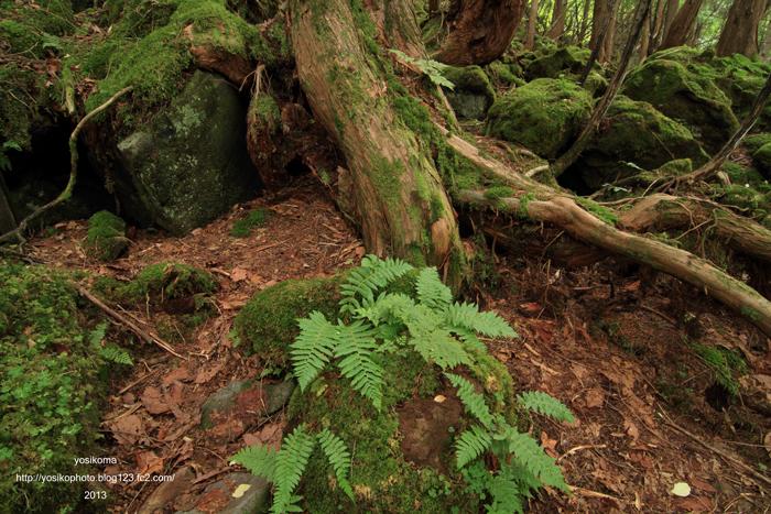 苔むす森1