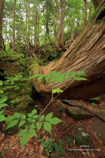苔むす森2