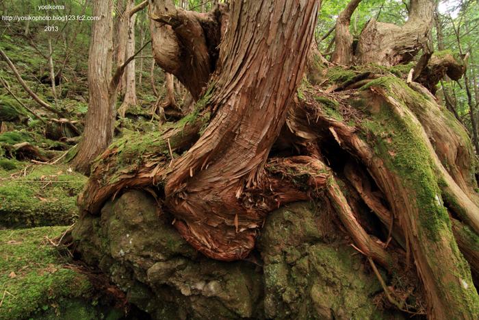 苔むす森3