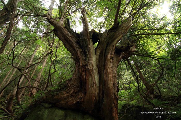 苔むす森4