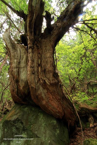 苔むす森5