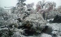 H250421突然の大雪