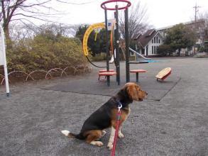 公園の遊具。