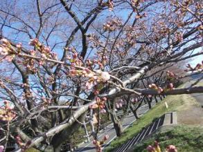 桜が咲いてた。