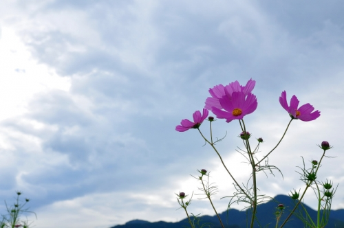 6見奈良14.09.24