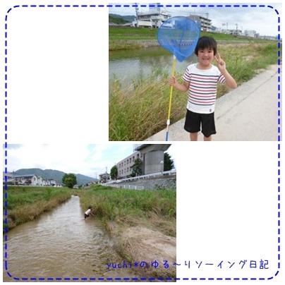 cats_20130703081817.jpg