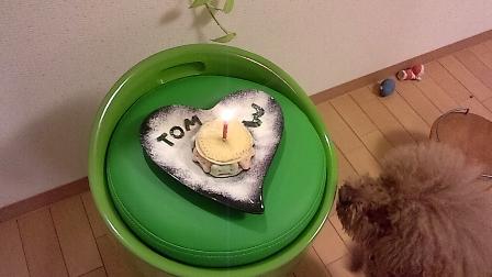 ケーキとトム