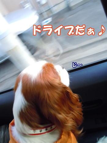 2012031902.jpg