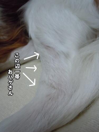 2012033008.jpg