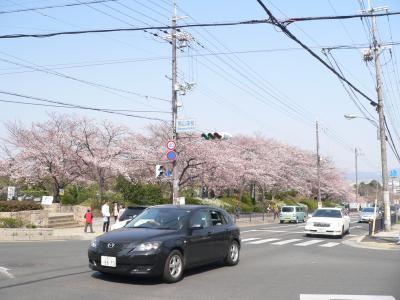 男山美桜にある「さくら近隣公園」の入口部分