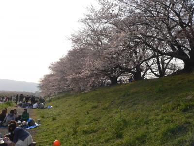 桜の下で思い思いのスタイルで花見をする人々