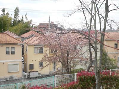 花吹雪のなかで今年の花の時期を終えようとしている桜の木