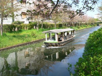 散った桜の花びらを押しのけながら進む三十石船